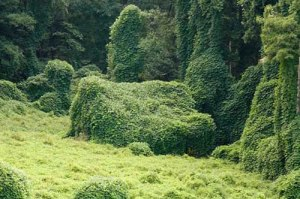 kudzu-covered-house