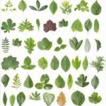 plant-images4-150x150[1]