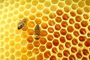 Bees-1-atroszko-sxc