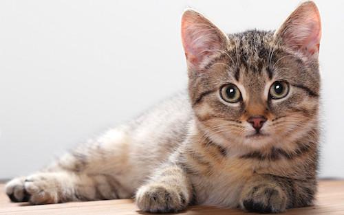 kitten500
